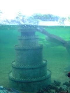 海王類はエイとカメ
