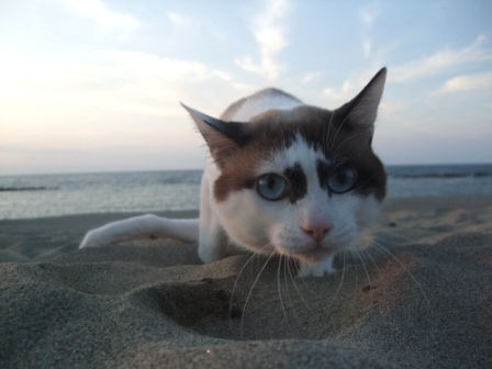 beach_to.JPG