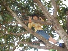 木登りだぜ!