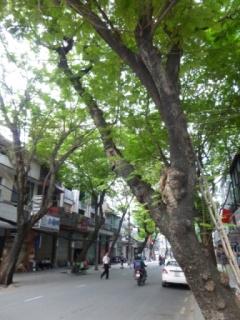 街路樹の通り
