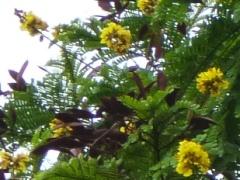 街路樹の花