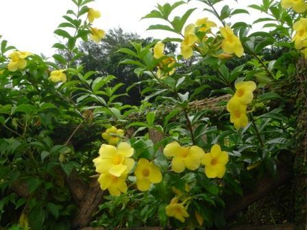 あちこちで咲いていた黄色い花